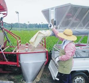 バラ肥料移替作業-02